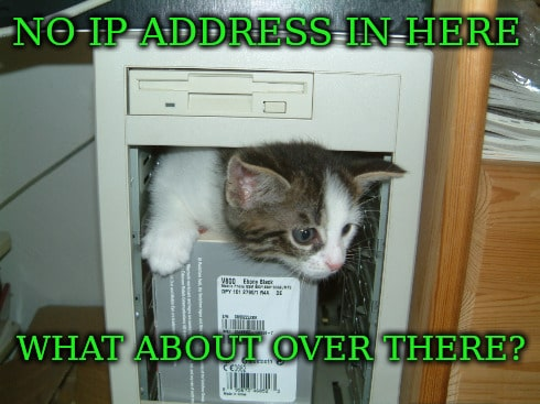 Cat IP Address